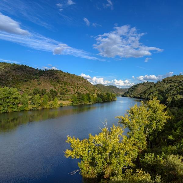 ONGAs condenam mais uma obra que contraria pacto ecológico europeu